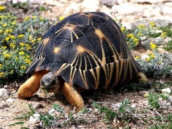 Черная Черепаха как один из четырех символов фен-шуй